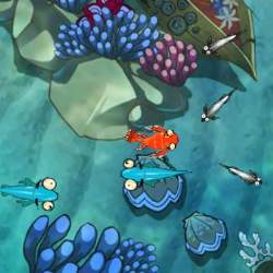 Zippy Fish Game